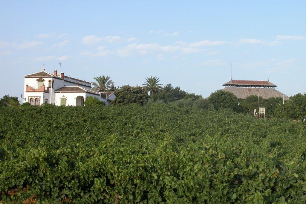 Majuelo de Soto y pabellón con viñas